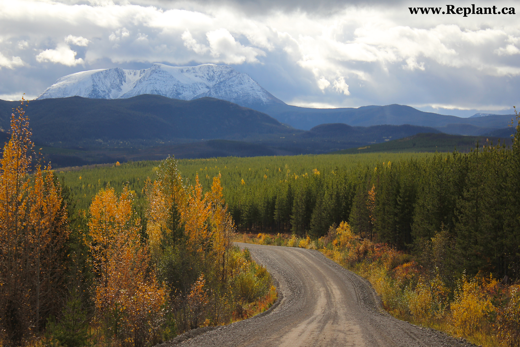 Replant Ca A Website Devoted To Canadian Reforestation